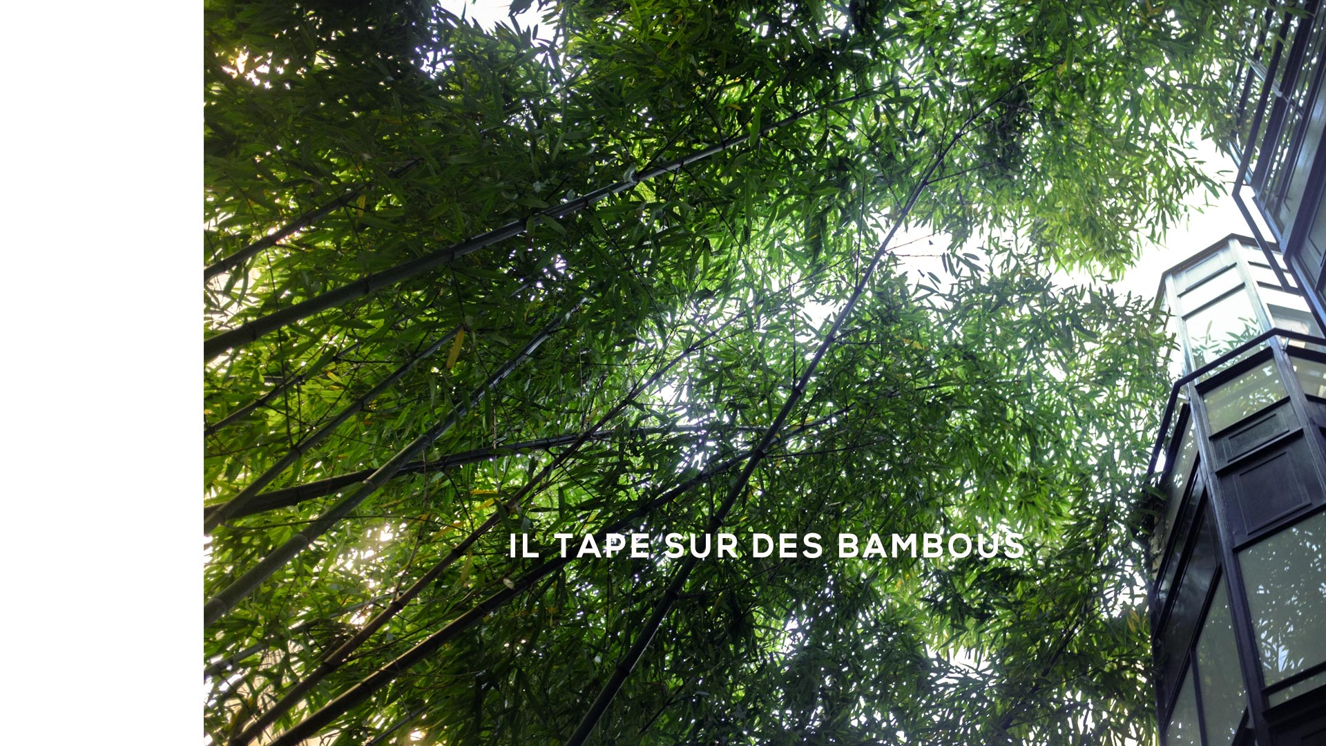 Il tape sur des bambous